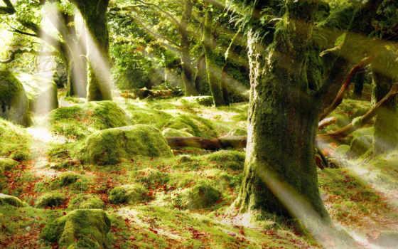 природа, лес, фон, мох, trees, дерево, images, природы, mystical,