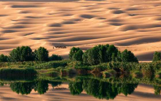 пустыне, оазис, состоящий, водоема, красивого, верблюдов, caravan, берегу, которого, растут, trees,