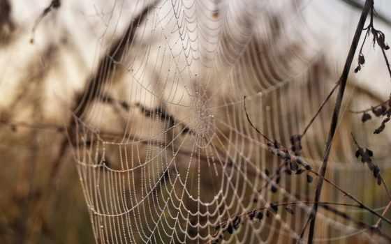роса, web, капли, макро,