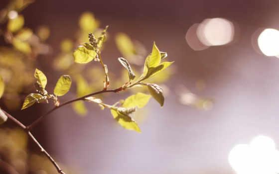 листья, природа, макро, trees, осень, leaf, though,