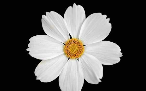 цветы, simple, art, клип, использование, personal, ток, license, librarysimple