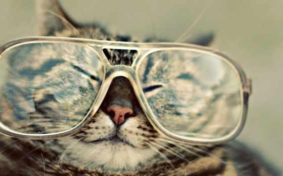 кот, очки, сказала