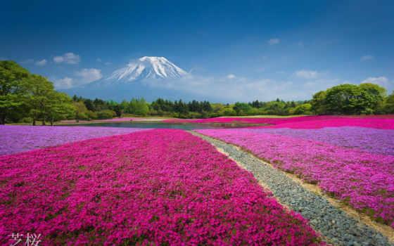 цветы, горы, mount, фудзи, гора, озеро, картинка, природа, рѕр, снять, япония,