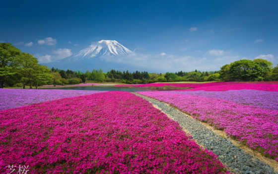 цветы, горы, mount