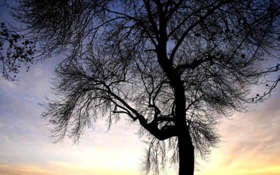 ауди, природа, категория