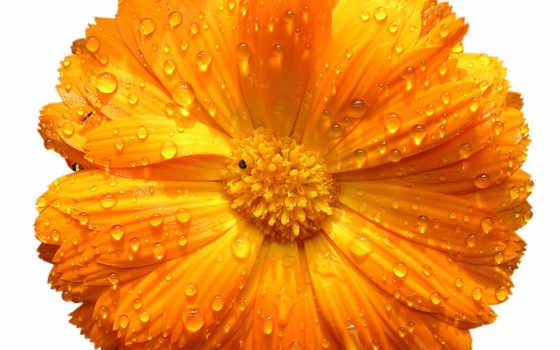 цветы, картинка, flowers, yellow, png,