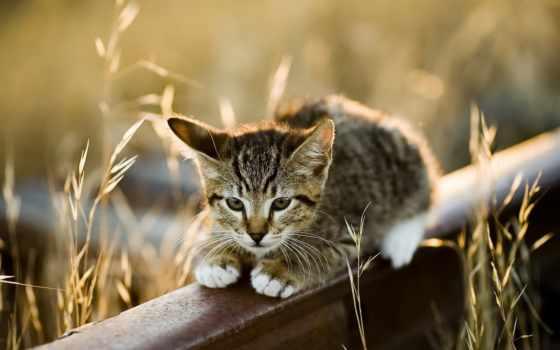 дороги, са, кб, уже, лучшая, коллекция, кошки, меня, загружено,