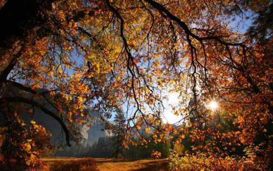 осень, branch, листва, дерево, sun, yellow, ветки,