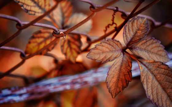 природа, осень, листва, tapety, сетка, krajobrazy, widoczki, taustapildid, pulpit,