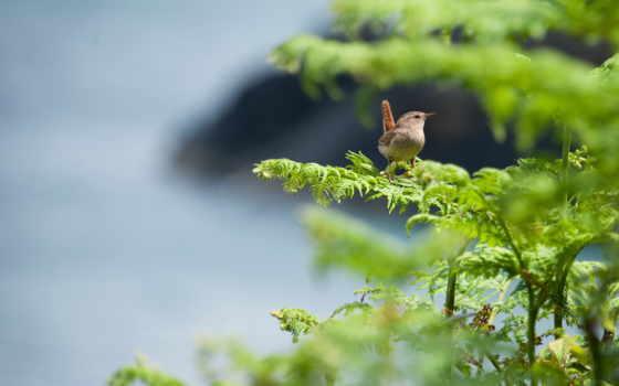 птица, дерево, cute, зелёный, birds,