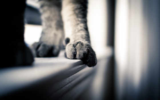кот, лапы, кота, свет, кошки, views, подоконнике, лапа, продолжительность, ус,
