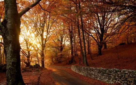 autumn, nature Фон № 25111 разрешение 1920x1200