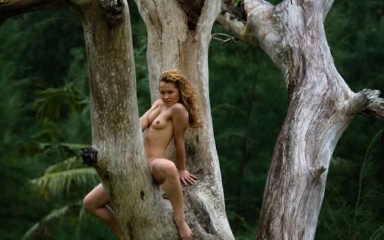 купить, голая, дереве