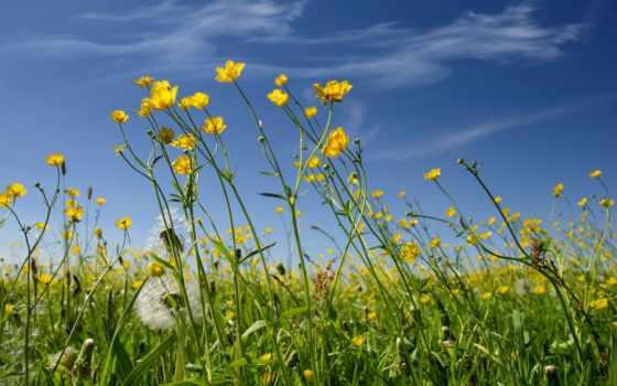 цветы, фон, flowers