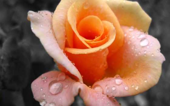 bạn, tình, vũ, của, yêu, những, danh, hoa, ngân, người, сено,