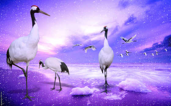 цапля, crane, птица