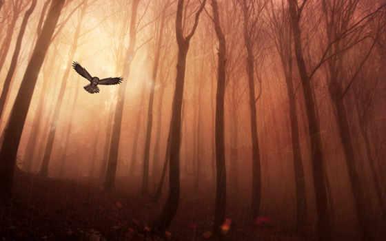 сова, лес, trees
