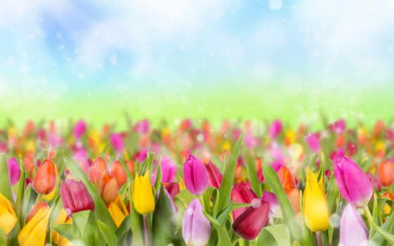 ваше, one, украсят, весна, тюльпаны, блики, высококачествен,