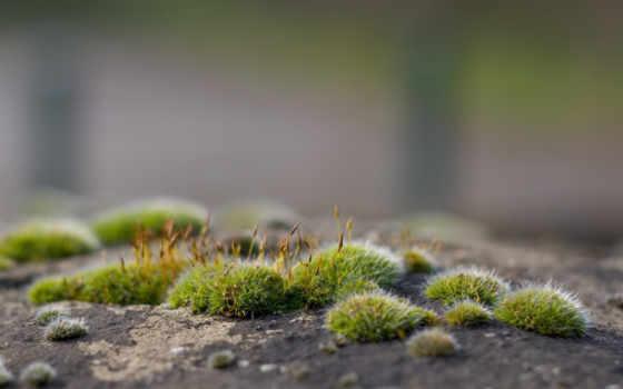 мох, цветет, камень, взгляд, free, размытость, зелёный, маховине, pics,