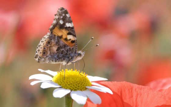 картинку, you, насекомые, pics, телефона, mobilnogo, бесплатную, телефон, размером,