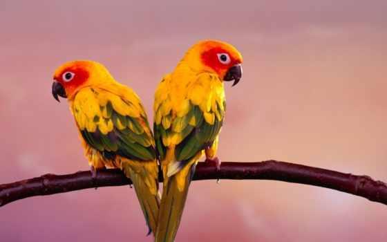 попугаи, попугаев, какаду, телефон, бесплатные,