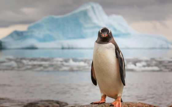 пингвин, ipad, glacier