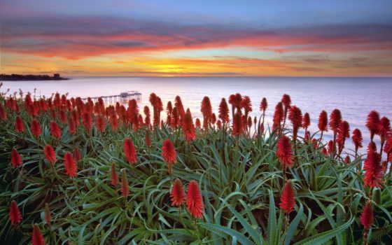 flowers, закат, море