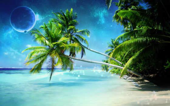 tropical, free, пляж