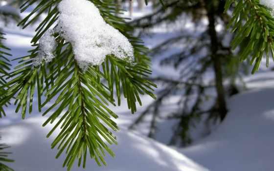 winter, снег, branch, красивые, рисунки, иголки,