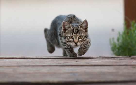 кот, интернет, магазин, cats, утро, pinterest, хороший, зоотоваров, немо, funny,