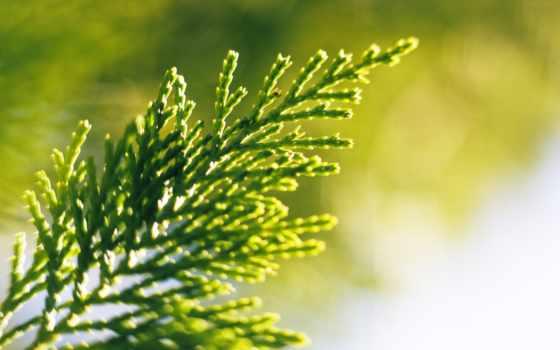 branch, растение, könig, love, электроника, сопровождение, you,