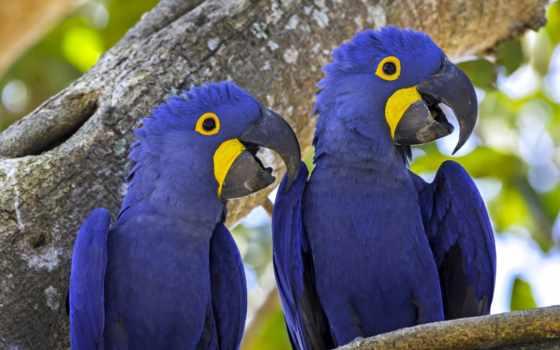 птицы, купить, попугаи, бесплатные, ynbdfc, проверенных, картины, настенные,