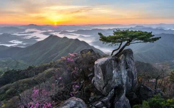 jaeyoun, фотоаппарат, rock, дерево, ttl, утро, вырасти, korea, pine, хороший, flash