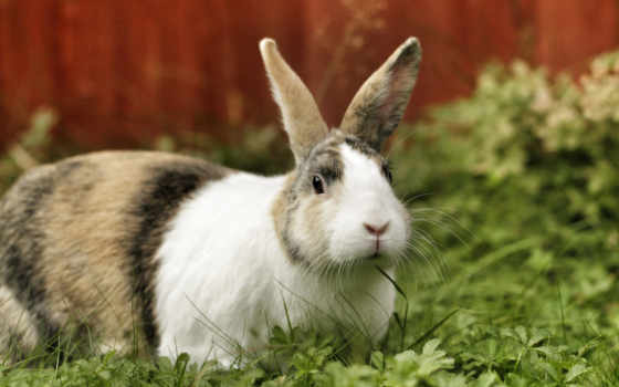 easter, rabbit, животные