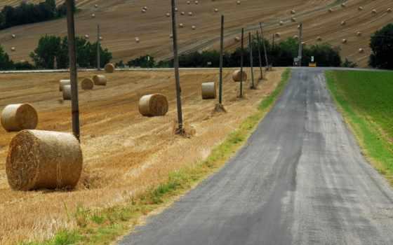 дорога, поле, сено
