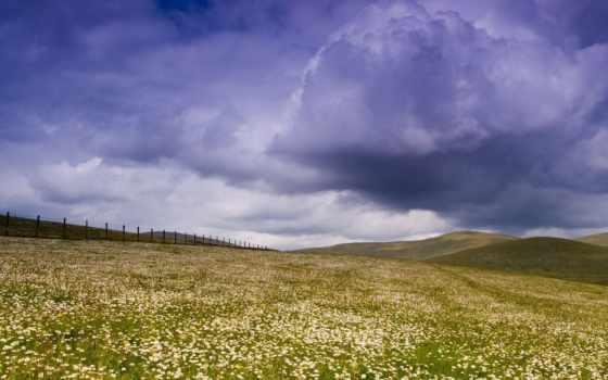 daisy, поле, flowers, со, лет, ago, desktop, clouds,