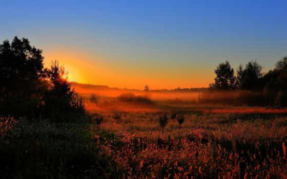 туман, рассвет, sun, утро, лес, природа, поле, раннее, поляна,