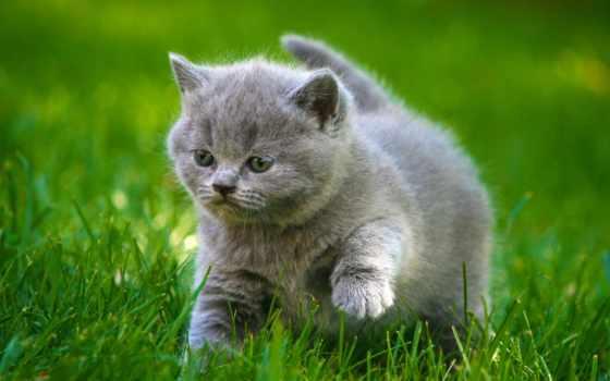 трава, котенок, прогулка, красивые, зеленой, траве, качестве, разрешениях,
