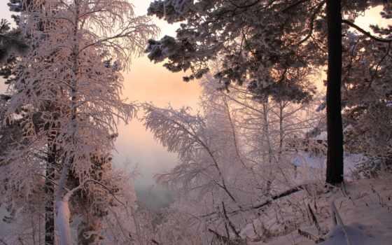 года, природа, time, зимние, trees, season, ecran, картинку,