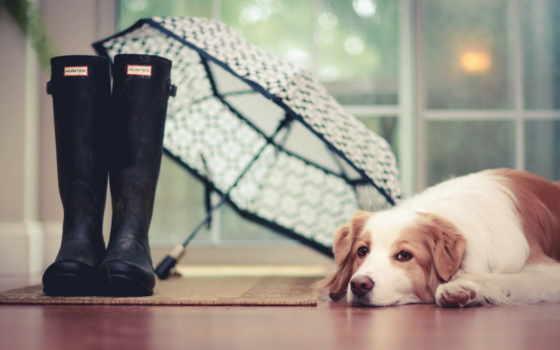 fundal, собаки, интерьер, câine, ploaie, pxwalls, уже, imagine, коллекция, загружено,