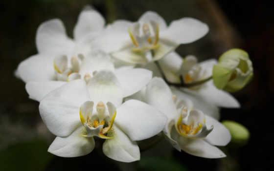 орхидеи, цветы Фон № 37368 разрешение 1920x1200