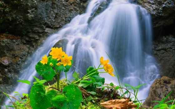 gardens, цветы, waterfalls