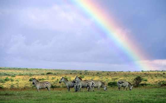 радуга, зебры, небо