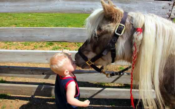 poni, трава, просмотреть, малчик,