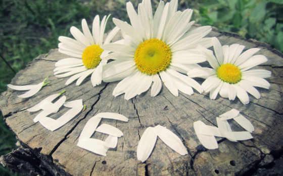 любви, semi, верности, день, днем, that, особого, этом, году, петра, отметили,