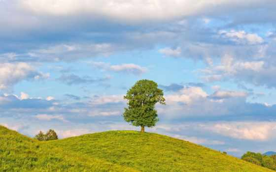 bukit, pohon, latar, gambar, belakang, фон, gratis, pasir, дерево, foto,