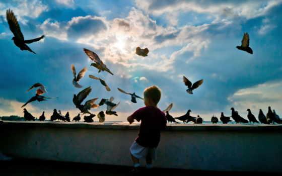 birds, небо, pigeons, flying, boy, ребенок, hobby, природа, sun,