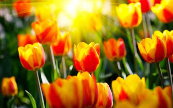 весна, весенние, sun