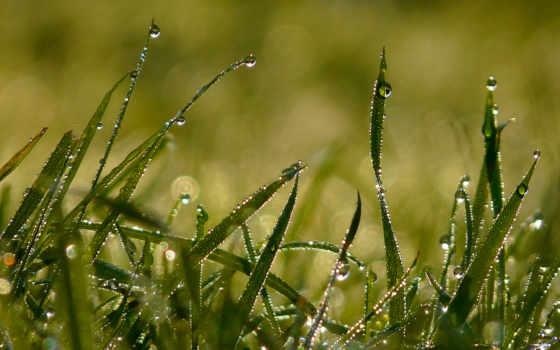 роса, капли, траве, трава, утро, макро,