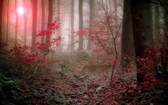 осень, поздняя, загружено, лес, gallery, взгляд, природа, снег, лесу, lodge,